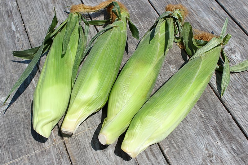 Harvested Sweet Corn