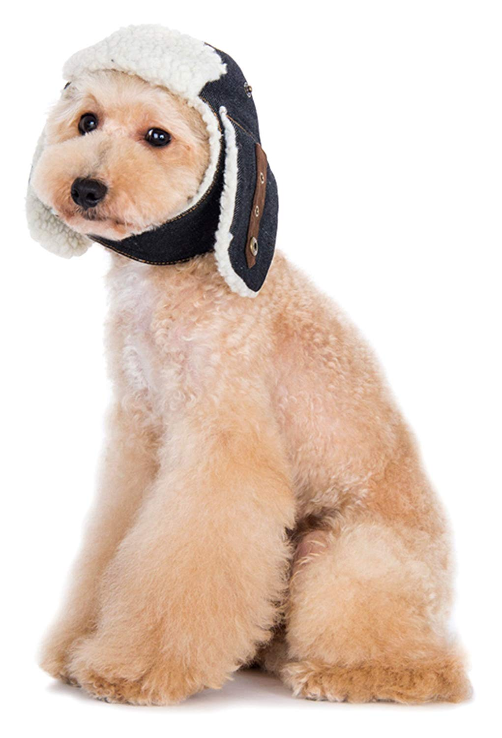 Winter hats for dogs and winter coats for dogs