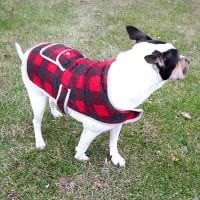 Winter Coats for Dogs: How to Tell if Your Dog Needs to Wear a Winter Coat