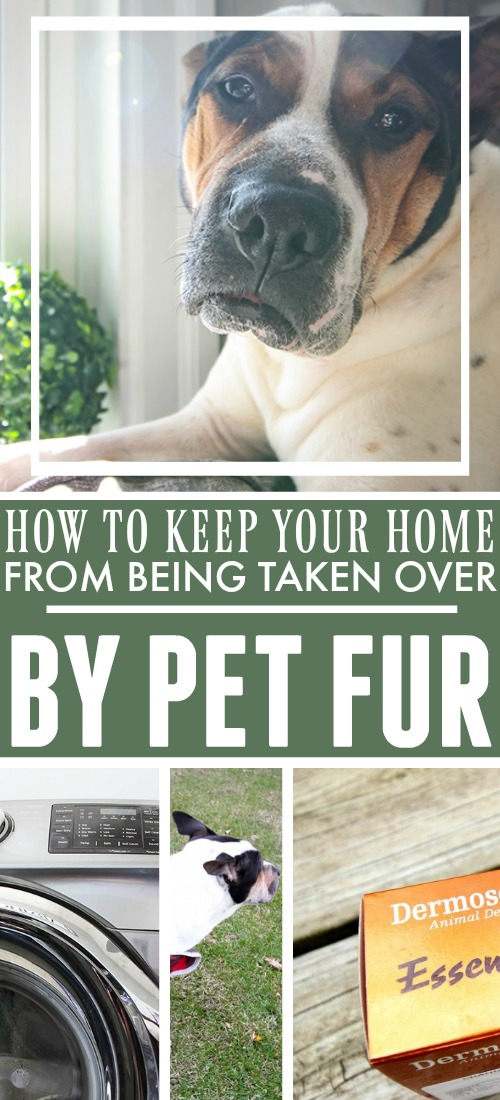 How to Keep Your Home From Being Taken Over by Pet Fur