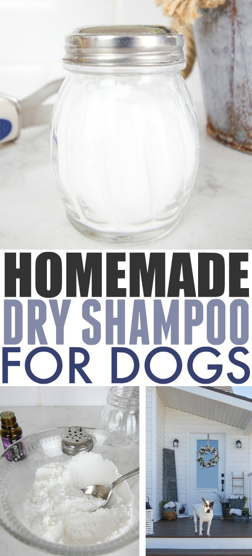 As humans we love how convenient dry shampoo is, but did you know that a version of it can be helpful for dogs too? Try this homemade dry shampoo for dogs recipe!