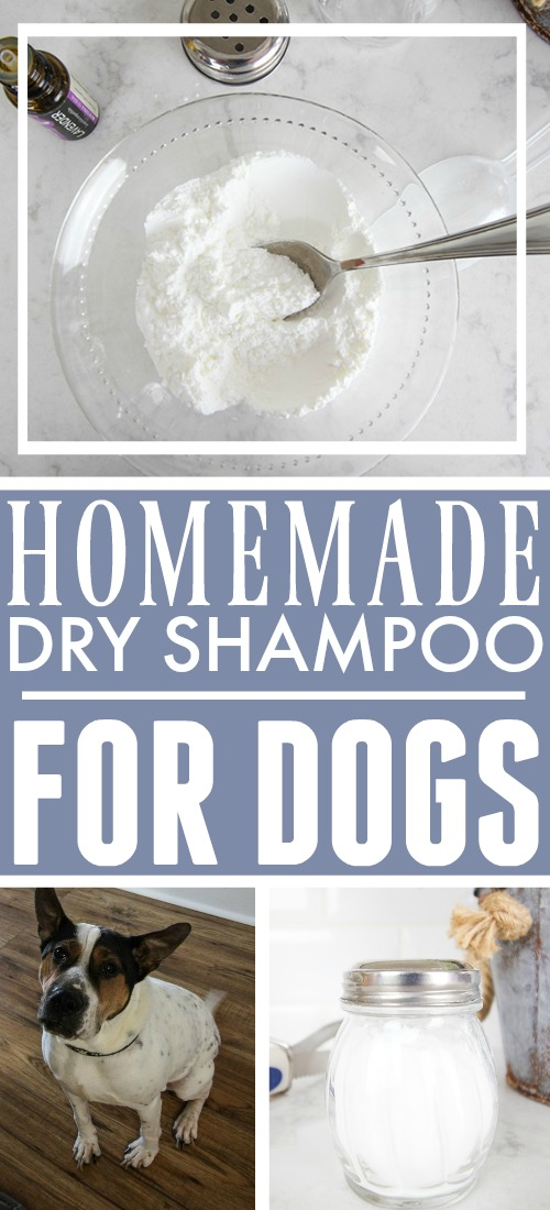 As humans, we love how convenient dry shampoo is, but did you know that a version of it can be helpful for dogs too? Try this homemade dry shampoo for dogs recipe!