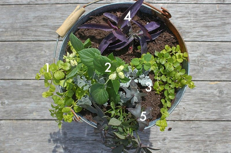 Try these easy planter recipes to fill the pots on your porch this summer for beautiful color all summer long!