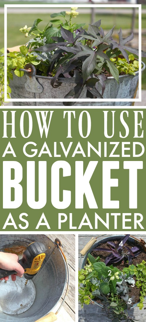 Using galvanized containers as planters is a clever and economical way to bring a bit of farmhouse style charm to your garden! Here are some tips for successful container gardening using galvanized buckets, troughs, and tubs!