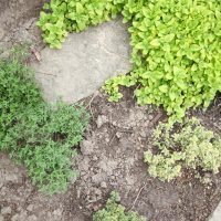 How to Grow a Perennial Herb Garden