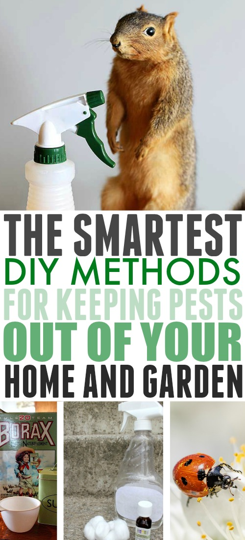 I always prefer a simpler, DIY method to an expensive and dangerous professional or chemical one. Here are the best DIY ways to keep pests out of your home and garden!