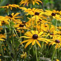 Top Ten Easiest Plants to Grow in Your Garden