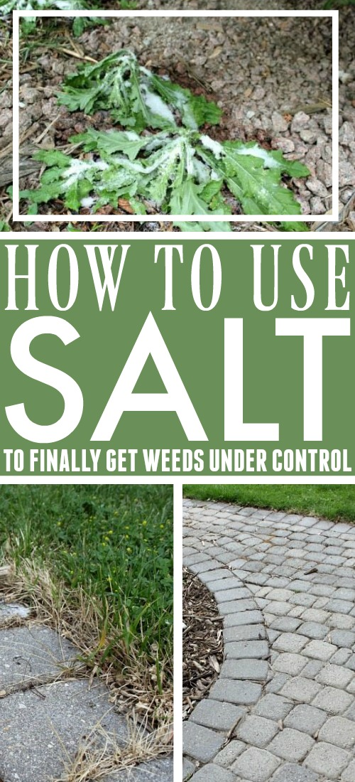 Did you know that you can effectively use salt to kill weeds? These tips will help you do it properly and with amazing results!