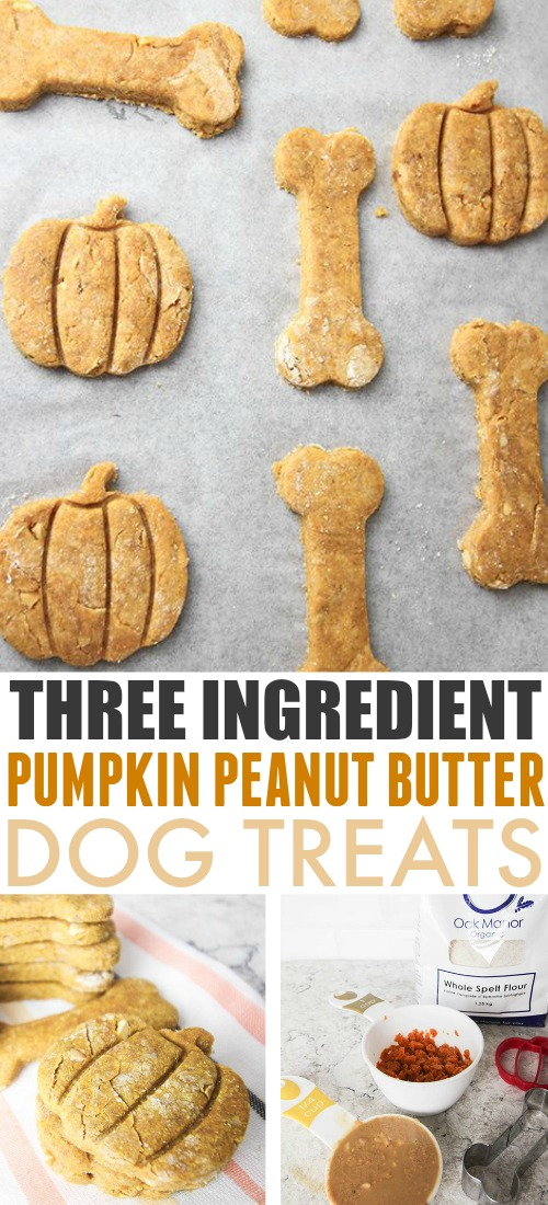 Three Ingredient Dog Treat Made With Pumpkin and Peanut Butter