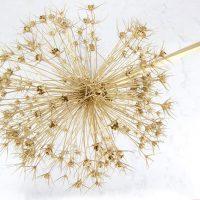Dried Allium Christmas Ornaments