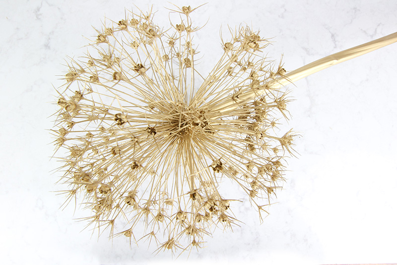 Gold painted dried allium Christmas ornament