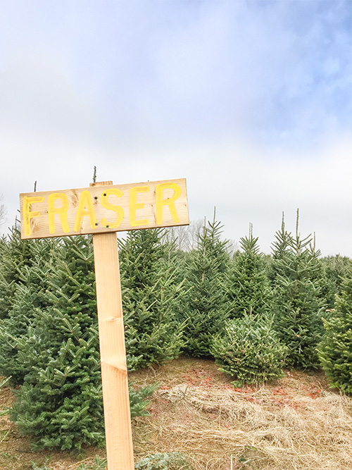 Real Christmas Tree Tips - Find Your Farm
