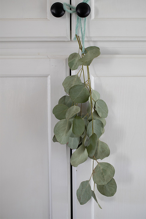 In today's post we'll talk about how to dry silver dollar eucalyptus so you can enjoy it in your home for as long as you like!