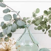 How to Dry Silver Dollar Eucalyptus