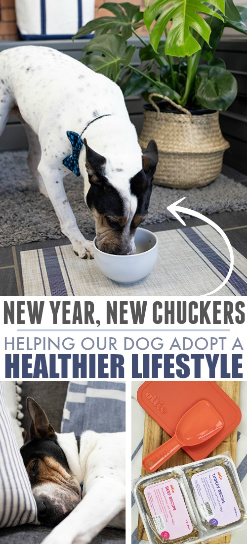 Steps we're taking to help our dog lose weight and improve his health, including trying a fresh food diet!