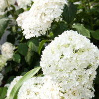 Plants for Home Decor: Top Ten Home Decor Plants to Grow in Your Garden