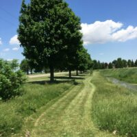 My New Naturalized Meadow Garden – Step One