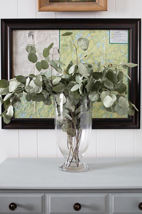 How to Dry Silver Dollar Eucalyptus