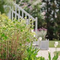 Pruning Hydrangeas for Maximum Growth