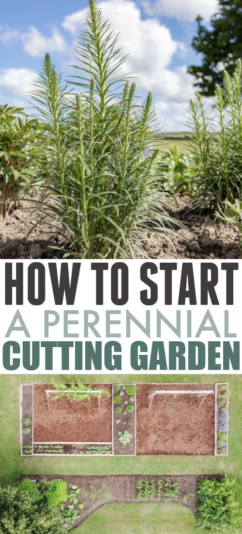 I started a perennial cutting garden this spring so today I'm sharing how things are looking so far and what I've learned!