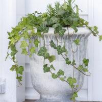 Perennial Planter Ideas