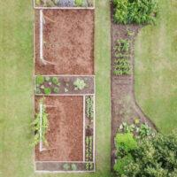 How to Start a Perennial Cutting Garden