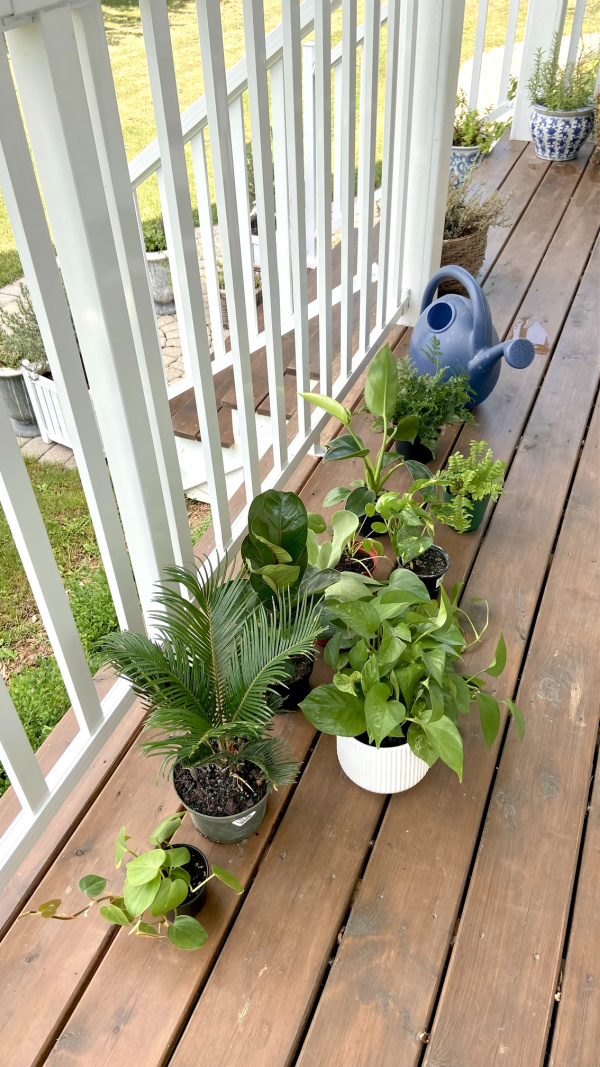 Five Things on a Friday - Houseplant Collection