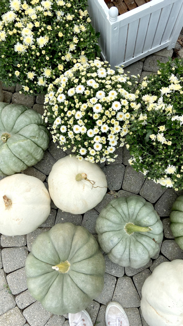 Five Things on a Friday - Pumpkin Season
