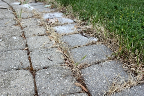How To Use Salt To Kill Weeds The Creek Line House