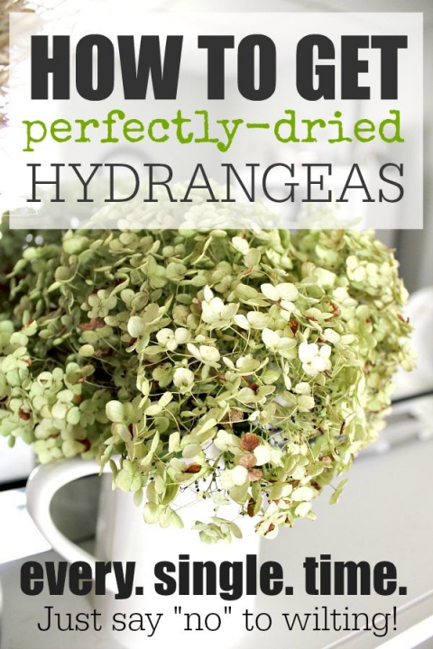 How To Dry Hydrangeas Perfectly Every Time The Creek Line House