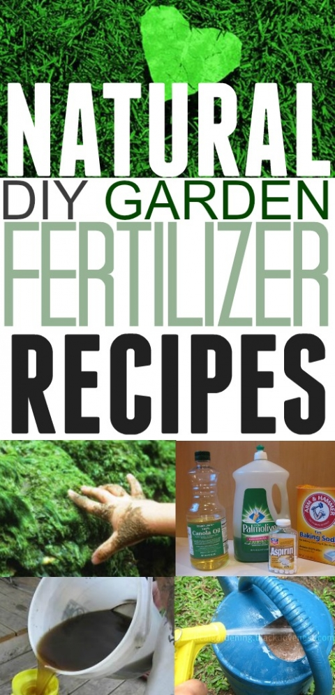 DIY Natural Garden Fertilizers for Miraculous Results – The