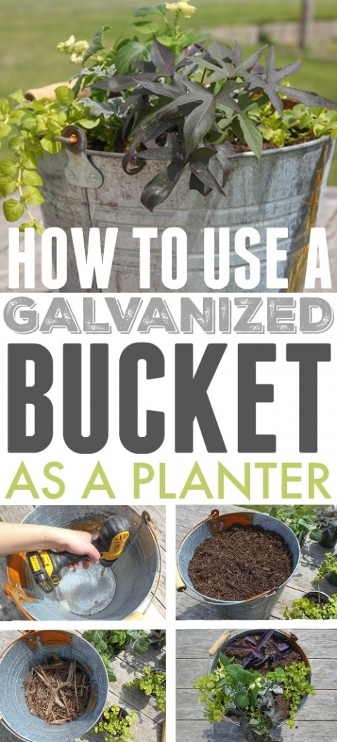 Using Galvanized Containers As Planters The Creek Line House
